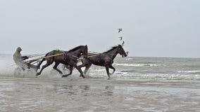Course de chevaux, trotteur français, course d'attelages pendant la formation sur la plage, Cabourg en Normandie, France banque de vidéos