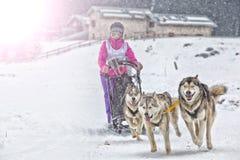 Course de chien de traîneau sur la neige en hiver photographie stock