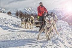 Course de chien de traîneau sur la neige en hiver photos stock