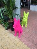Course de couleur de chiens de Colorrun Images stock