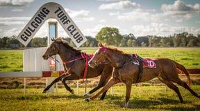 Course de deux chevaux de course sans jockeys chez Gulgong NS Images libres de droits
