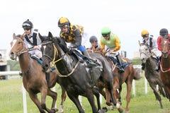 Course dure entre les chevaux de course Images libres de droits