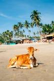 Course en Inde Image libre de droits