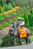 Course en Thaïlande Photos stock