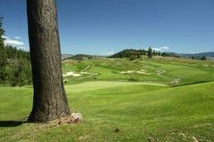 course golf Royaltyfri Foto