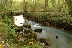 Course of a stream. An idyllic course of a stream in the autumn Royalty Free Stock Photography
