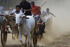 Course traditionnelle de chariot de Bullock photographie stock