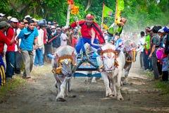 Course traditionnelle de vache à Bali Photo stock