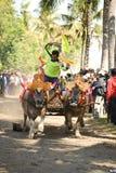Course traditionnelle de vache à Bali photographie stock libre de droits