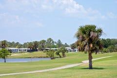 course2热带的高尔夫球 免版税库存图片