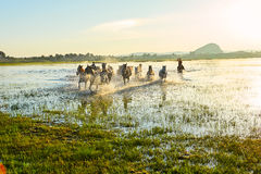 The coursers and herd Royalty Free Stock Images