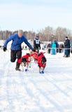 Courses de chien de traîneau de course de Baikal Photos libres de droits