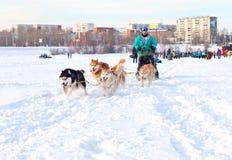 Courses de chien de traîneau de course de Baikal Photos stock