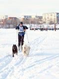 Courses de chien de traîneau de course de Baikal Image stock