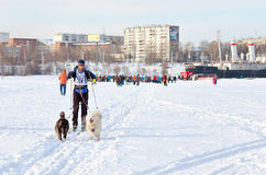 Courses de chien de traîneau de course de Baikal Photographie stock