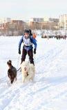 Courses de chien de traîneau de course de Baikal Image libre de droits