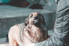 courses de fille un chien égaré elle aime vraiment Profondeur de zone photo libre de droits
