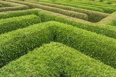 Courses in a labyrinth of green hedges royalty free stock image