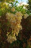 Courson blanc dans un buisson de l'avant photo stock