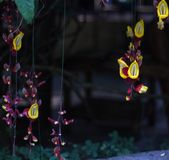 Courtain of Flowers. Flowers hanging as decoration Royalty Free Stock Photography