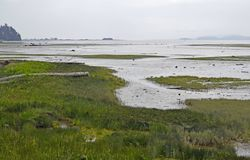 Courtenay estuary during low tide. Lush green estuary landscape during low tide with; Goose Spit Park in the background,  Courtenay Vancouver Island British Royalty Free Stock Photos