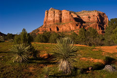 Courthouse Butte. The late afternoon sun shines on Courthouse Butte near Sedona, Arizona with yucca plants about to sprout their springtime blossoms Stock Images