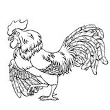 Courting rooster black contour on white. Courting rooster black contour line on white background. Fiery cock, chicken a symbol of the Chinese new year 2017 Royalty Free Stock Photos