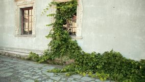 Courtyard with battered walls on which wooden Windows, growing large green Bush stock video