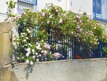 Courtyard country garden roses stock photos