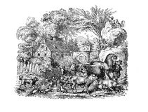 Courtyard farm with domestic animals, vintage engraving. Idyllic representation of a farm lifestyle, with a young farmer surrounded of every kind of domestic Stock Photography