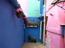 A courtyard of a house with flowers in Burano Stock Images