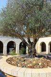 Courtyard with olive tree, church of the Multiplication of the loaves and fish, Tabgha, Israel Stock Photos