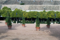 Courtyard with pots and orange Stock Images