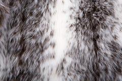 Cout della pelliccia Immagini Stock Libere da Diritti
