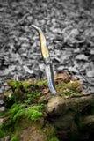 Couteau de muela d'Espagnol Image libre de droits