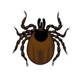 Coutil d'Ixodes Image stock