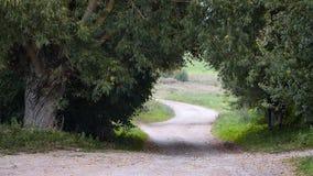 Coutryweg onder Oude Wilgen Stock Foto's