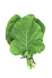 Couve Cabbage. Mineira Stock Photo