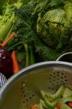 Couve-de-milão, aipo, cebola, cenoura Fotografia de Stock Royalty Free