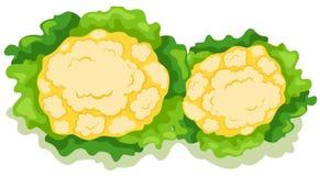 Couve-flor ilustração royalty free
