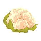 couve-flor Foto de Stock