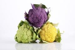 Couve-flor colorida do bebê Imagens de Stock