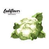 Couve-flor dos desenhos animados Vegetal verde maduro Vegetariano delicioso Foto de Stock Royalty Free