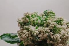 A couve-flor encontra-se na cadeira de madeira fotos de stock royalty free