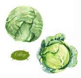 Couve fresca verde isolada no fundo branco Fotografia de Stock