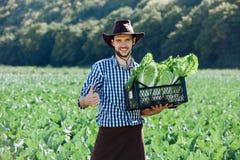 A couve nova da colheita do sol do campo do fazendeiro do retrato das mãos da gaveta da cesta do chapéu do homem esverdeia o vege imagem de stock royalty free