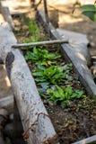 Couve, tipo, verde, cofre forte, fresco, limpo Fotos de Stock Royalty Free
