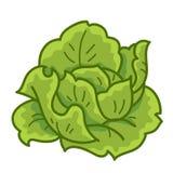 Couve verde