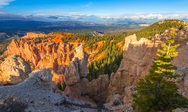 Couvercle de canyon de Ponderosa par la belle lumière de coucher du soleil Image libre de droits