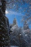 Couvert dans la neige Photographie stock libre de droits